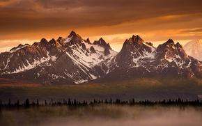 Wallpaper forest, light, mountains, fog