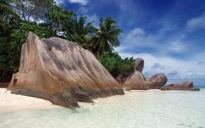 Wallpaper tropics, palm trees, shore, Stones