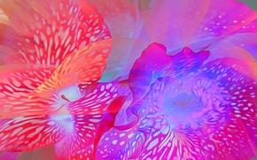 Picture line, flowers, rendering, paint, petals