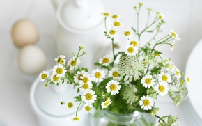 Picture white, leaves, flowers, chamomile, plants