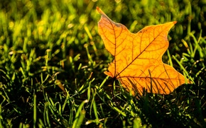 Wallpaper greens, grass, leaves, macro, yellow, background, widescreen, Wallpaper, leaf, wallpaper, leaf, yellow, widescreen, background, leaves, ...