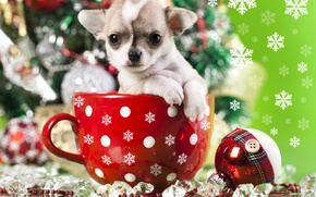 Picture decoration, snowflakes, toy, dog, ball, mug, puppy, doggie, Chihuahua