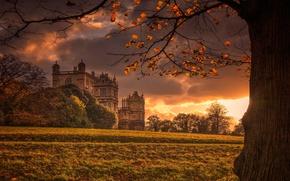 Wallpaper autumn, light, castle, tree, England, Palace