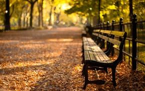 Picture sunset, Park, new York, sunset, new york, autumn, Central Park
