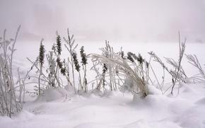 Picture winter, macro, snow, Nature, nature, winter, snow, macro