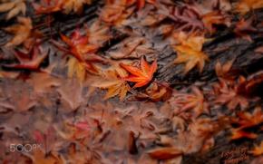 Wallpaper autumn, water, foliage, macro