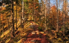 Picture autumn, forest, leaves, trees, nature, colors, forest, Nature, falling leaves, trees, autumn, leaves, fall
