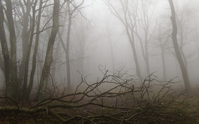 Picture forest, fog, Autumn, forest, autumn, fog