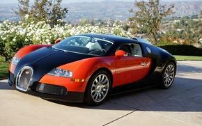 Picture Bugatti, Veyron, Red, Black, Valley, Profile