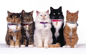 Picture white, eyes, cat, mustache, together, black, cats, red, striped, five, spotted, sitting, collars