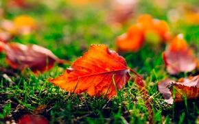 Picture grass, leaves, Autumn, blur
