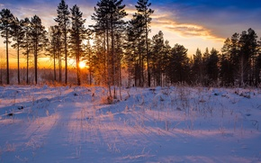 Picture winter, forest, rays, snow, dawn, forest, pine, winter, snow, sunrise