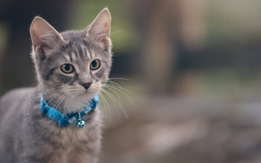 Wallpaper cat, collar, kitty, grey, cat