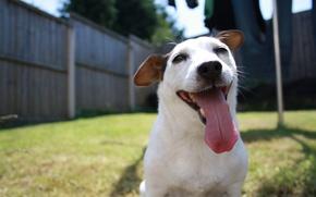 Wallpaper language, face, dog, dog, happy