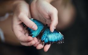 Picture butterfly, palm, Jesse Duke, Blue Morpho