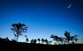 Picture the sky, grass, stars, trees, night, The moon, silhouette