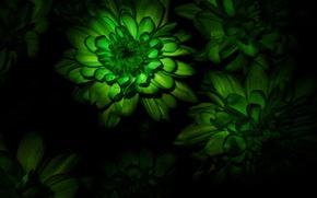 Picture flower, macro, bouquet, flower, Chrysanthemum, Chrysanthemum