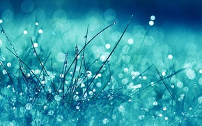 Picture greens, grass, water, drops, macro, light, squirt, Rosa, glare, lights, rain, blur