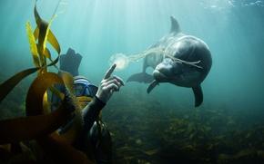 Picture algae, Dolphin, The ocean, the diver, Medusa.