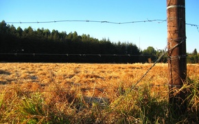 Wallpaper the fence, field, forest
