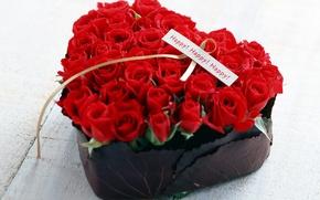 Wallpaper flower, red, roses