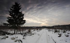 Wallpaper tree, garbage, Winter, road, the sky, sadness