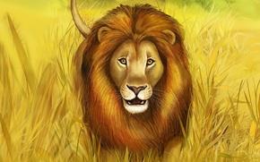 Picture grass, predator, Leo, mane, big cat