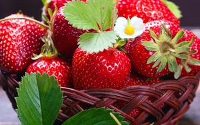Picture berries, strawberry, basket, fresh, strawberry, berries