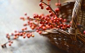 Picture macro, berries, basket