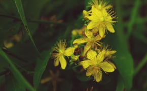 Picture greens, flowers, yellow, the vegetation is