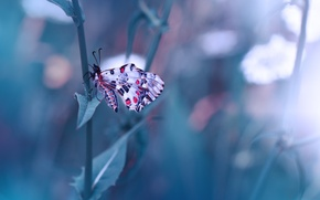 Picture macro, nature, stems, butterfly