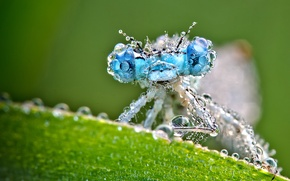 Picture wet, drops, macro, sheet, dragonfly, green background
