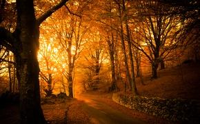 Picture road, light, trees, Park, foliage, Autumn
