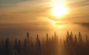 Wallpaper fog, the sun, trees, Winter