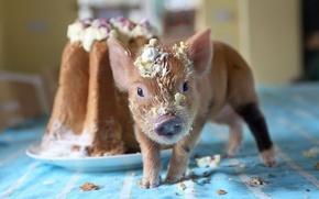 Picture cupcake, crumbs, pig