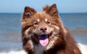 Wallpaper background, portrait, dog