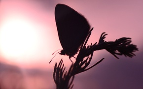 Picture the sun, sunset, butterfly