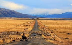 Picture road, machine, sheep, Chile, Patagonia