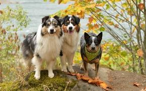 Wallpaper friends, background, dogs