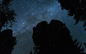 Picture stars, landscape, trees.the sky