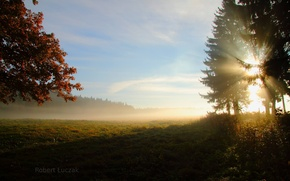 Wallpaper field, forest, the sun, rays, trees, nature, morning
