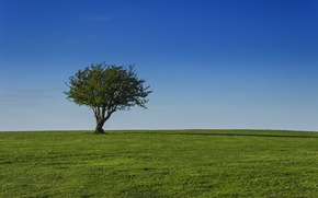 Picture field, the sky, grass, tree, Sunny, crown