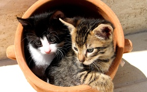 Picture Kittens, pot