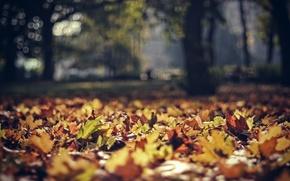 Picture autumn, leaves, Park, foliage, focus, Poland, bokeh, poland