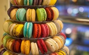 Picture cookies, colorful, cuts, macaron, macaron