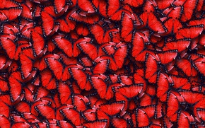 Picture texture, texture, red butterfly, butterflies
