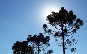 Picture sky, tree, sun, sunny day