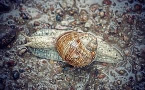 Picture rain, grey, asphalt, snail