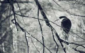 Picture winter, bird, ago, Heron, branches