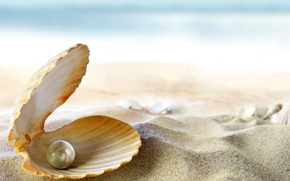 Picture sand, sea, beach, the sun, tropics, the ocean, shell, beach, sand, seashell, pearl, perl